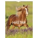 Väggkalender Hästar (Miljö)